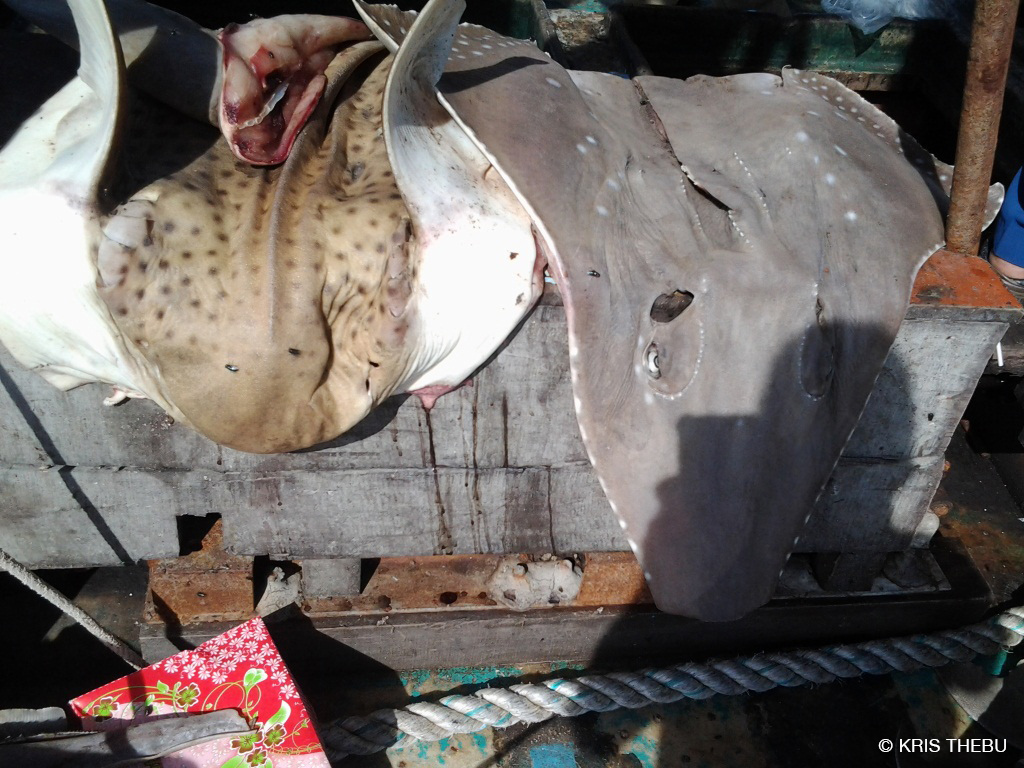 dead sharks and rays found on illegal Vietnamese fishing boat