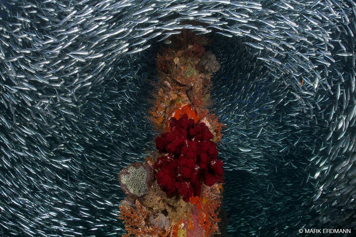 fish swirl around jetty, Raja Ampat, Indonesia