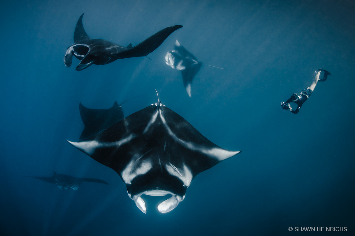 Raja Ampat's manta populations are at the center of a thriving marine tourism industry that is now the primary economic driver of the region. (© Shawn Heinrichs)