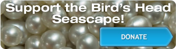 Support the Bird's Head Seascape - Donate Now!