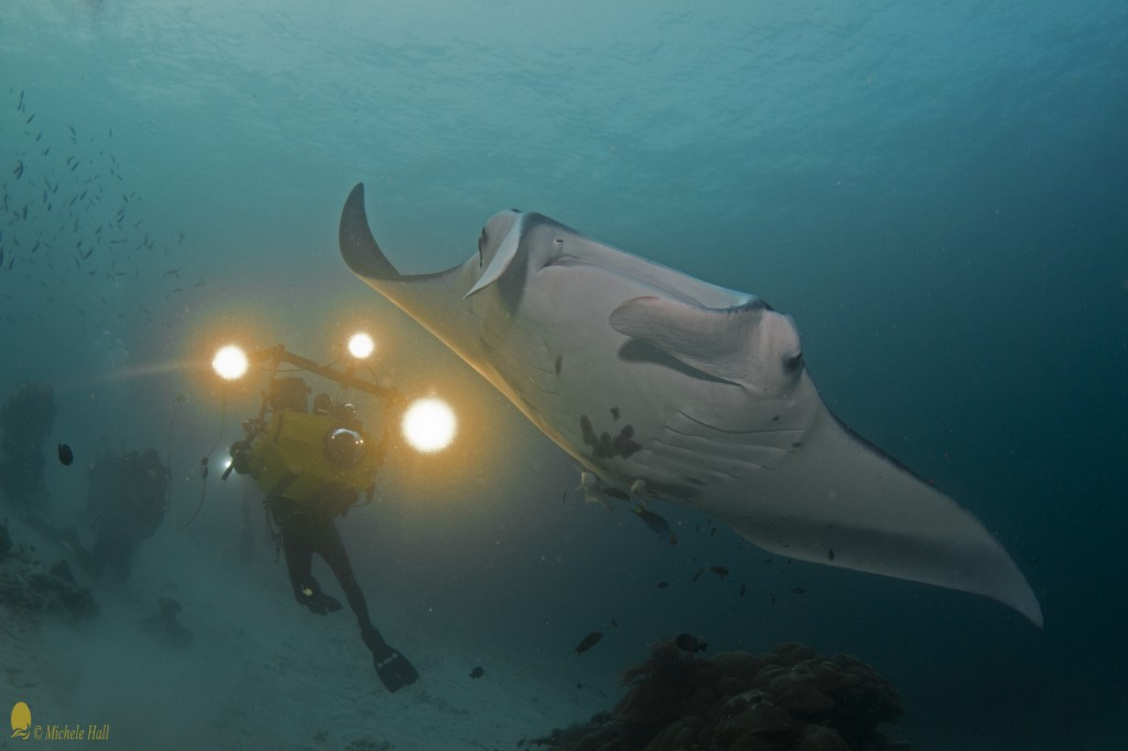 "Manta Ray (Manta birostris), Howard Hall and IMAX camera for ""MFF Journey to the South Pacific"""