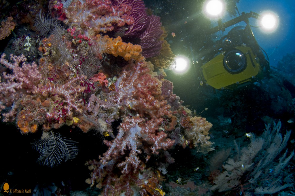"Howard Hall and IMAX camera on coral reef for ""MFF Journey to the South Pacific"""