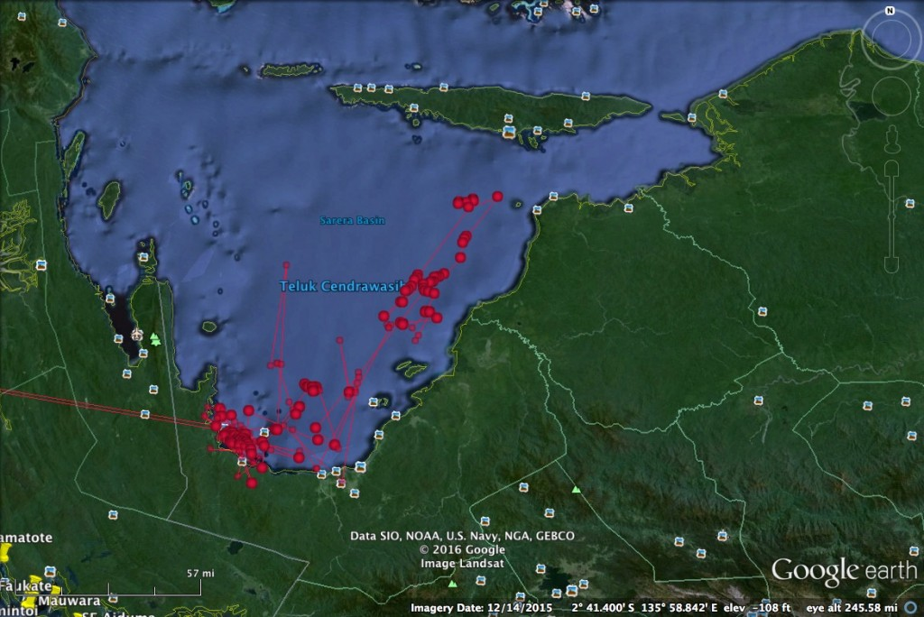 "One of the more ""typical"" movement datasets. From June 2015 through March 2016, this 4.5m shark (""Goris"") has remained continuously within the south-eastern section of Cendrawasih Bay, venturing at one point north towards Yapen but soon returning to the Kwatisore region."
