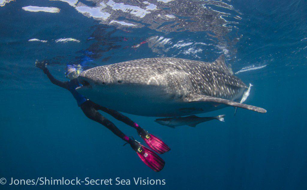 Ellen gets close to a whale shark!