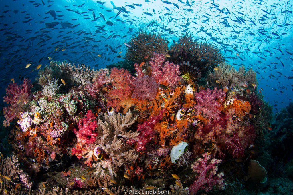 Alex Lindbloom_Reef I