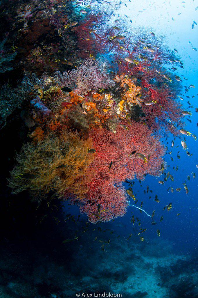 Alex Lindbloom_Reef II
