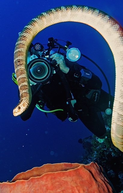 Photographing a Diver & Snake