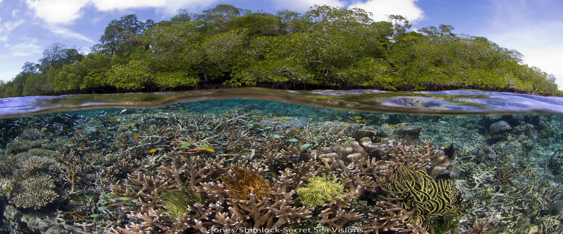 Seagrass beds animals - Blog Post