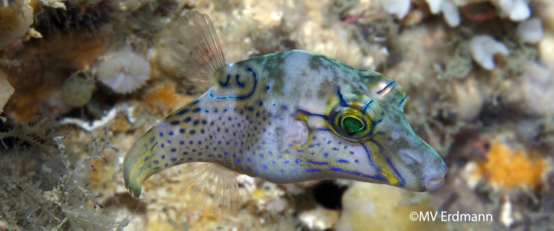 Fish-GeekMERMVE-header