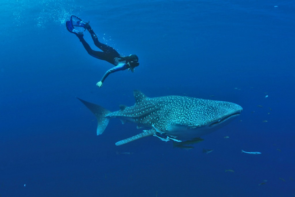Mica snorkeling with a Whale Shark