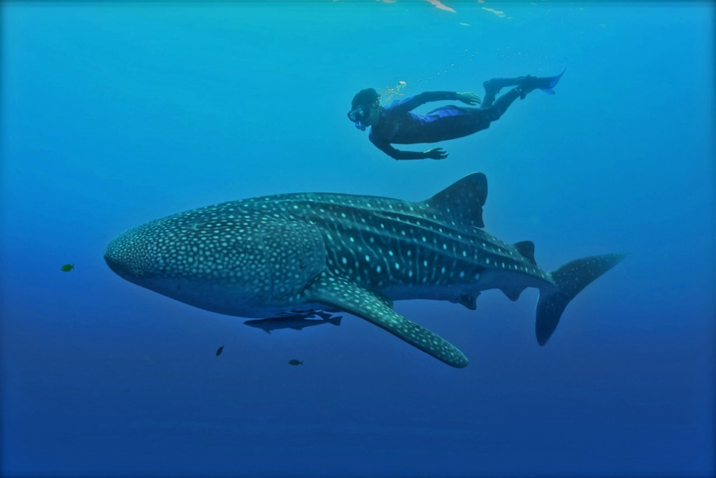 Brahm and his first Whale Shark