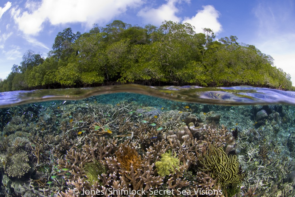 Indonesia, West Papua, Raja Ampat. The lack of wave action combined with clear water allow corals to grow very near the surface in this unique environment.