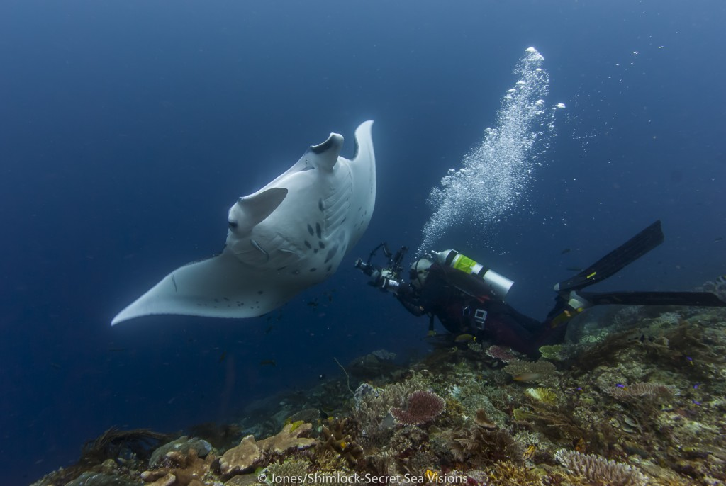Diver photographing manta from the perfect position for an ID image.