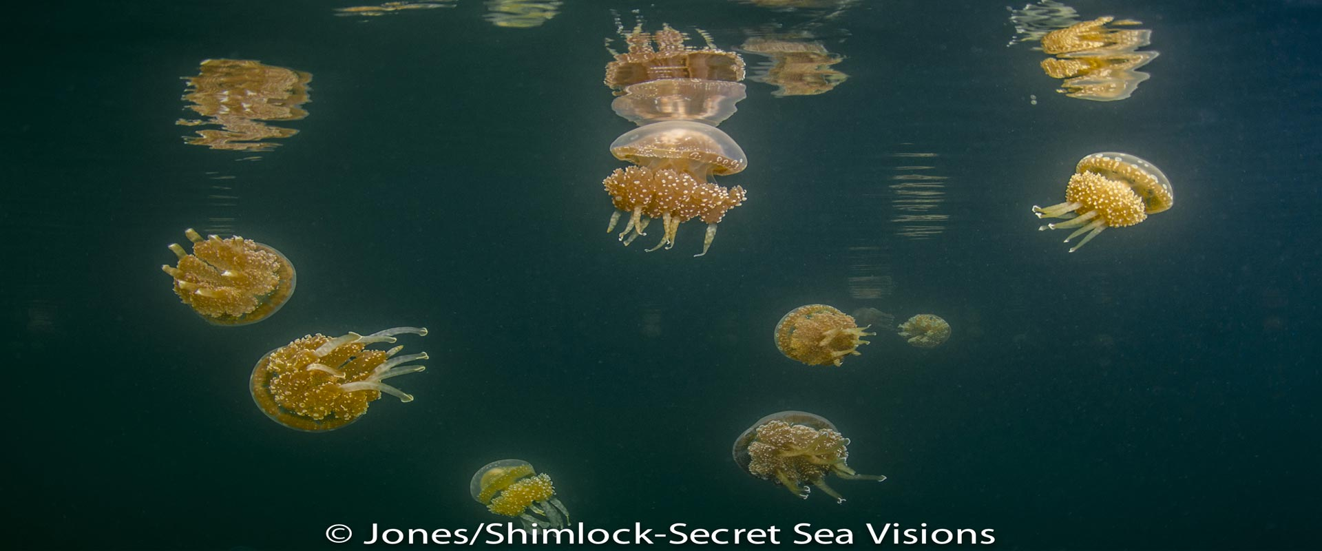 Jellyfish-Lake-header