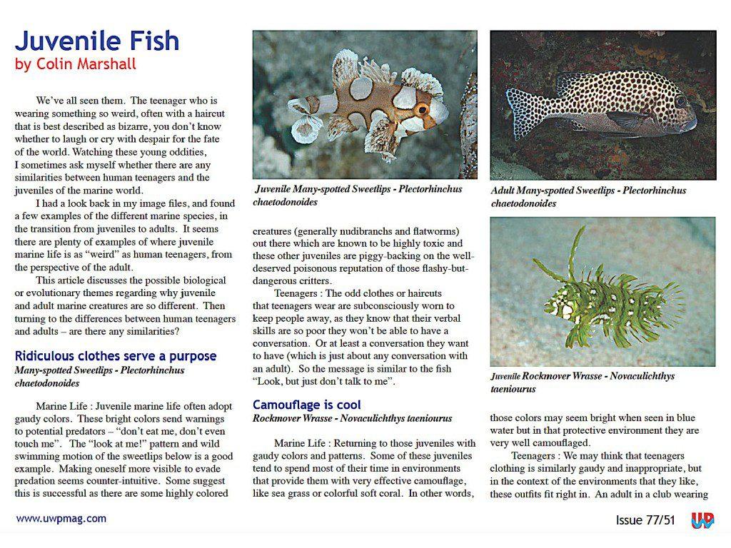Juv Fish full_Page_1