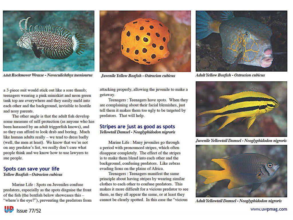 Juv Fish full_Page_2