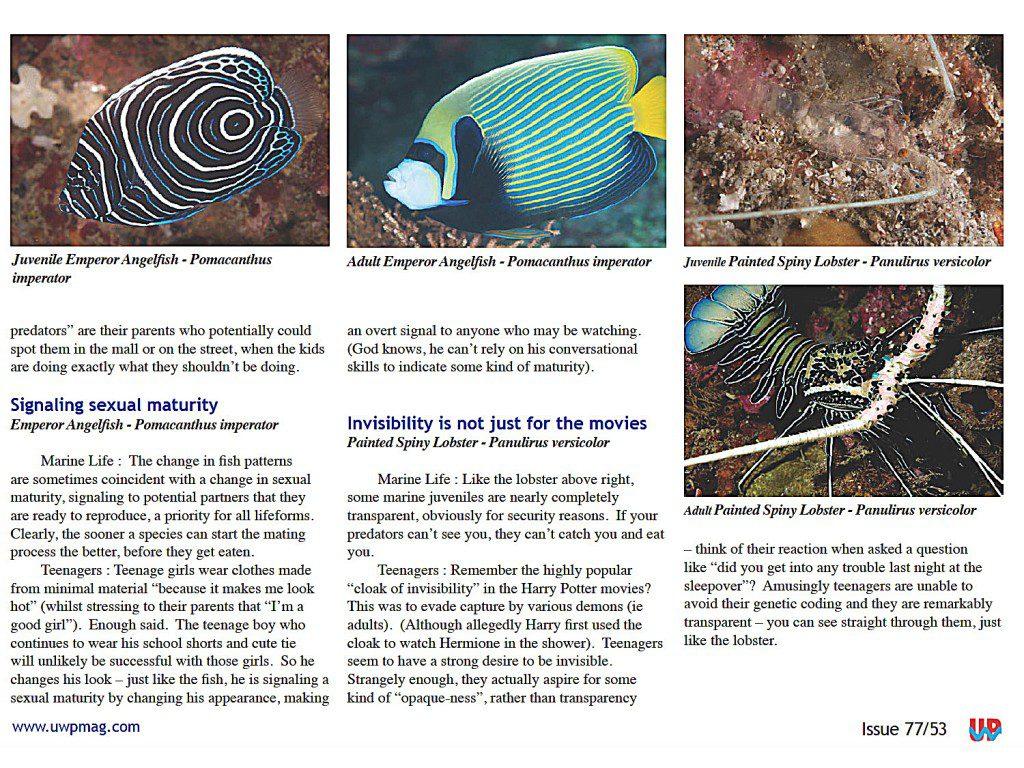 Juv Fish full_Page_3