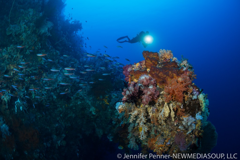 Schools of fish and an explosion of color are signature to Raja Ampat.