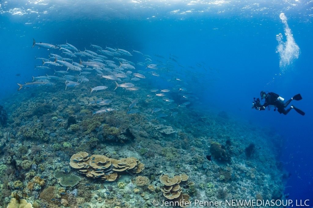 A top destination for encountering the most marine life diversity,Raja Ampat has it all!