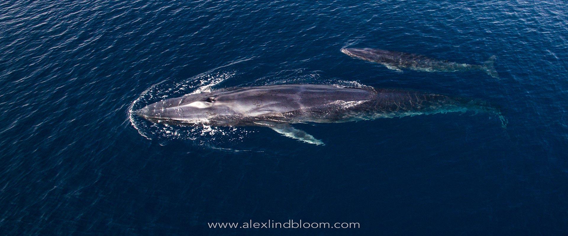 Omura-whale-header