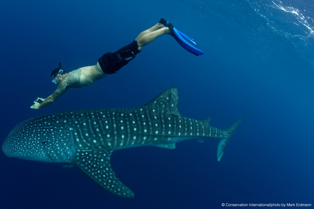 Schannel-photographing-tagged-shark