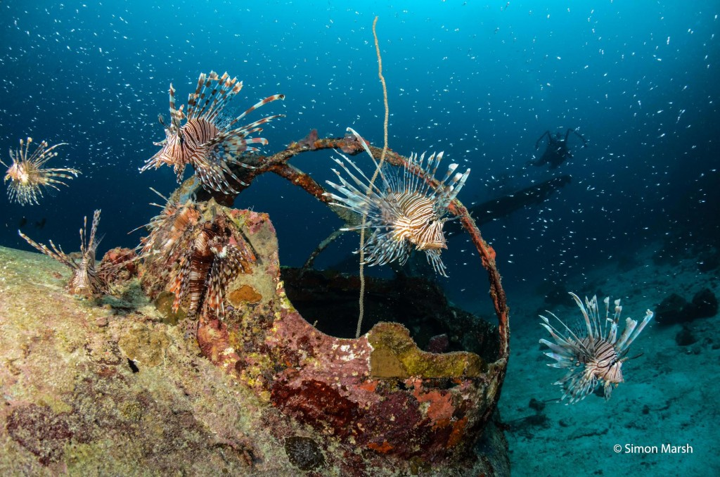 Lionfish on Catalina Flying Boat off Biak