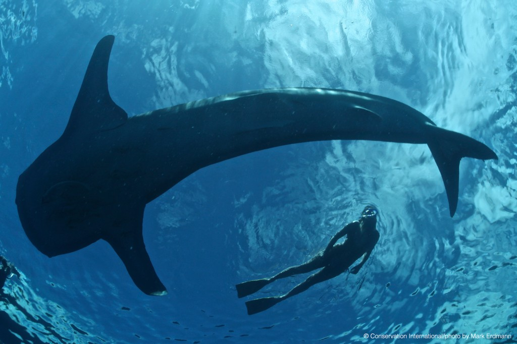 Snokeller-with-whale-shark