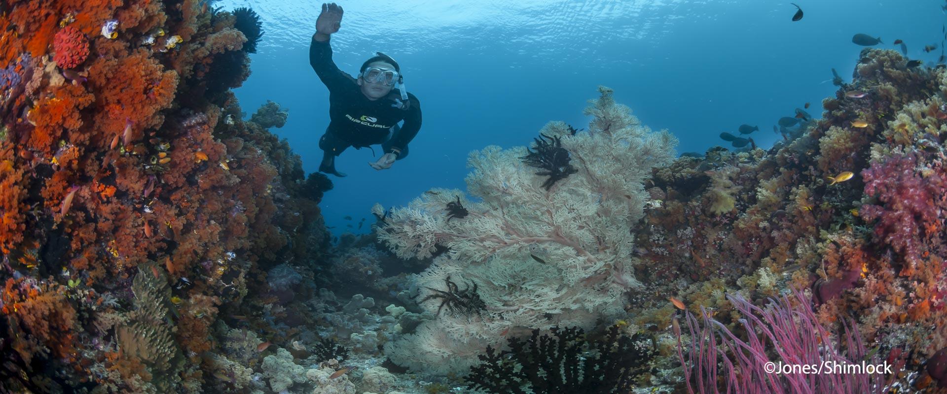 Snorkeling-BHS-header