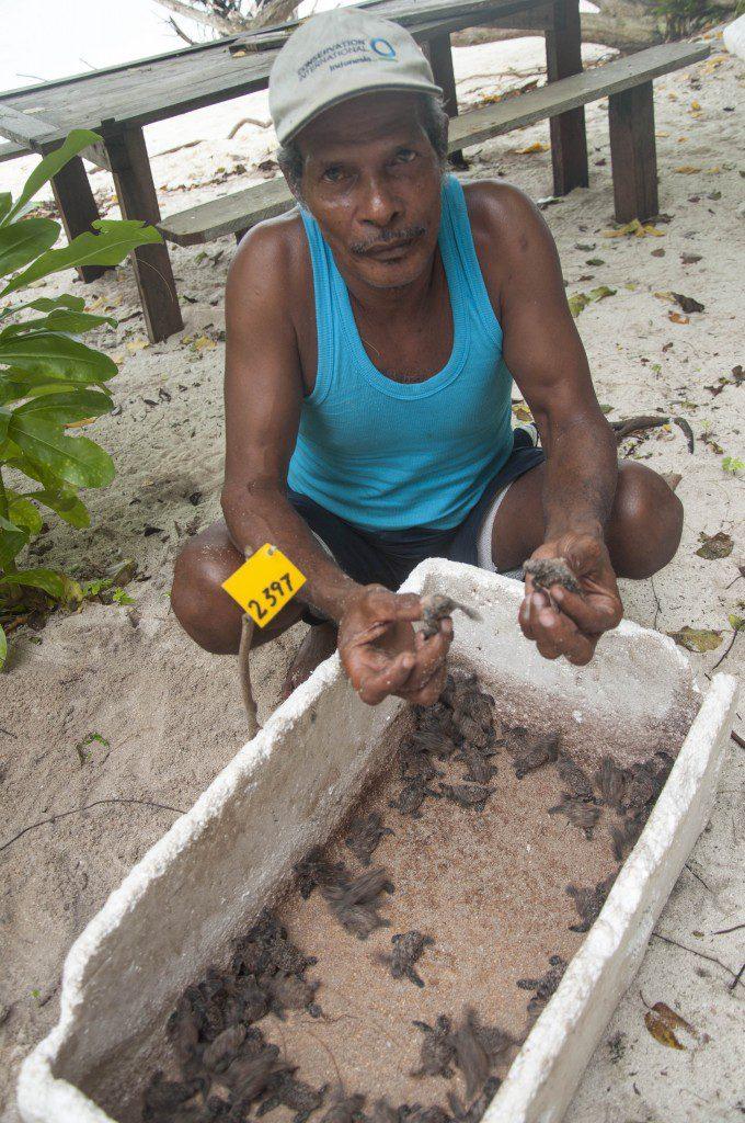 Tete Irisa, mengumpulkan tukik yang baru menetas di Sarang perli