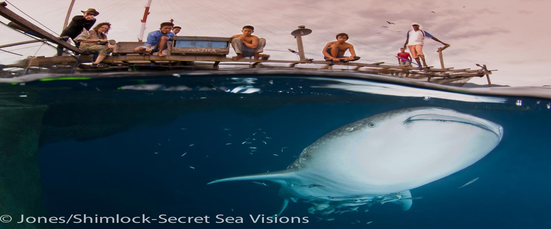 Whale-Shark-header