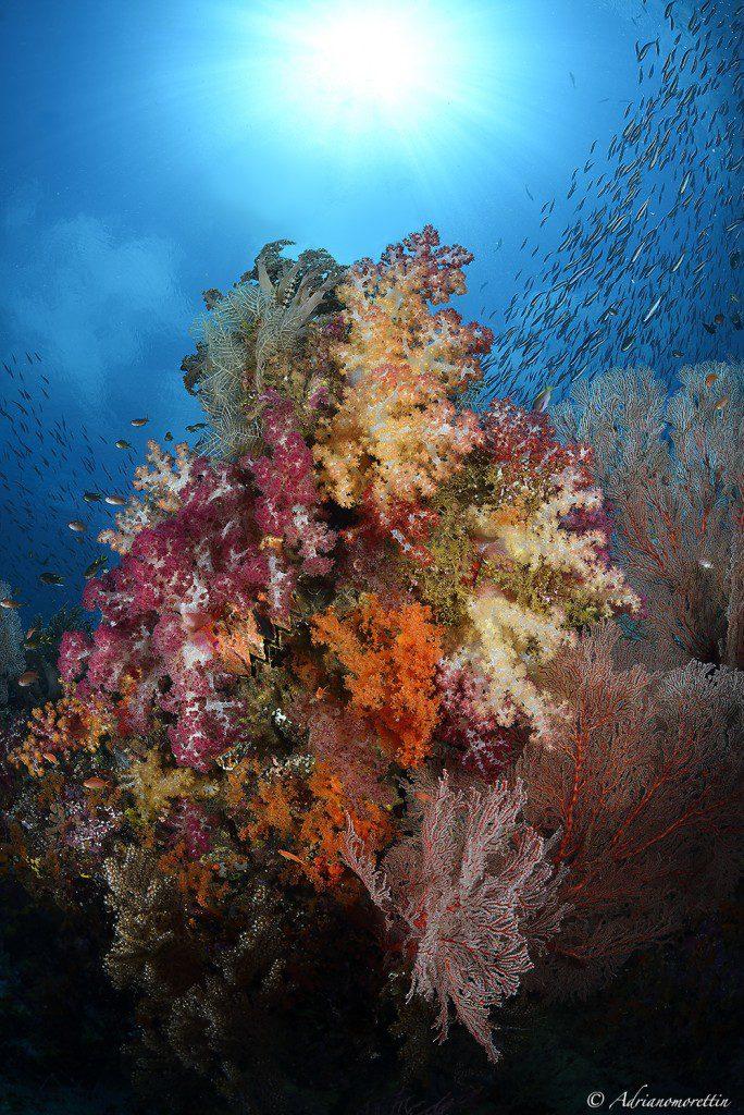 Fiabacet Reefscape