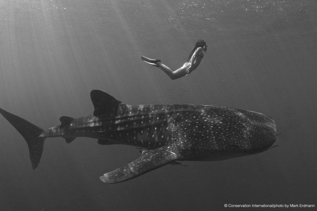 snorkeller-with-whale-shark-sun-rays