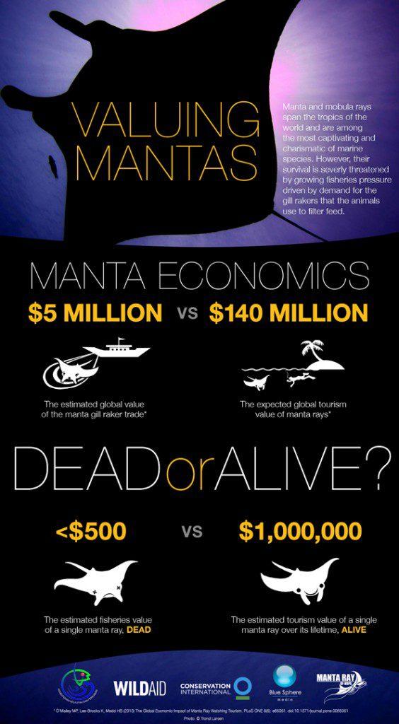 valuingmantas_infographic_6-564x1024
